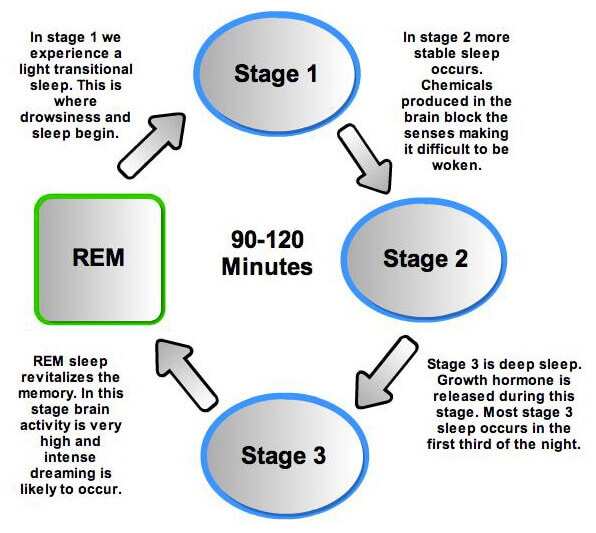 rem stage sleep, you get dream at REM